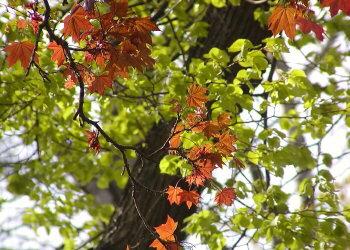 Podzim p?ichází.